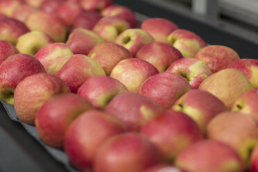 Apples in factory on conveyor belt - ZEF15924