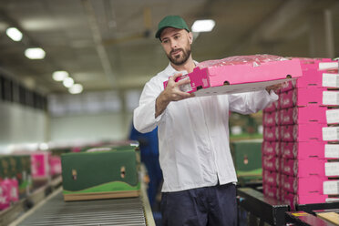 Worker packing apple boxes - ZEF15946