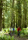 A group of three mountain bikers riding through the thick and mossy rain forest of the Olympic Peninsula. - AURF00017