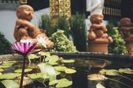Thailand, Chiang Mai, Buddha statues and pond of water lilies in Wat Inthakhin Sadue Muang temple - GEMF02258