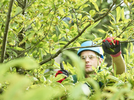 Tree cutter pruning of tree - CVF01057