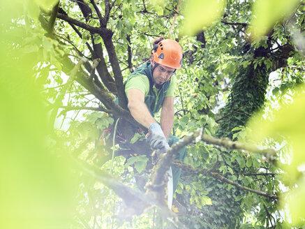 Tree cutter pruning of tree - CVF01060