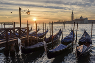 Gondolas moored on a canal in Venice, Italy, at sunrise. - MINF07488