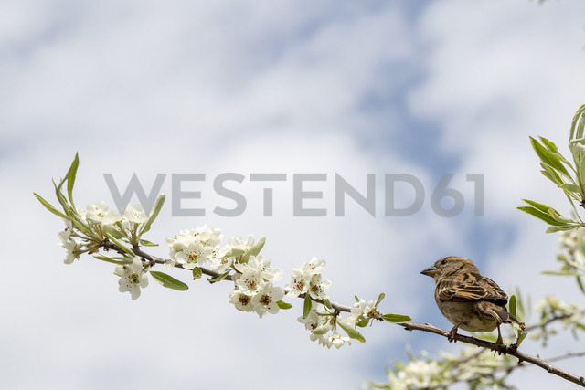 Bird on a branch of a tree - NGF00484 - Nadine Ginzel/Westend61