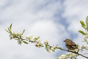Bird on a branch of a tree - NGF00484