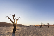 Africa, Namibia, Namib-Naukluft National Park, Deadvlei, dead acacia trees in clay pan - FOF10054