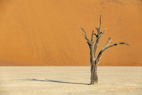 Africa, Namibia, Namib-Naukluft National Park, Deadvlei, dead acacia tree in clay pan - FOF10057