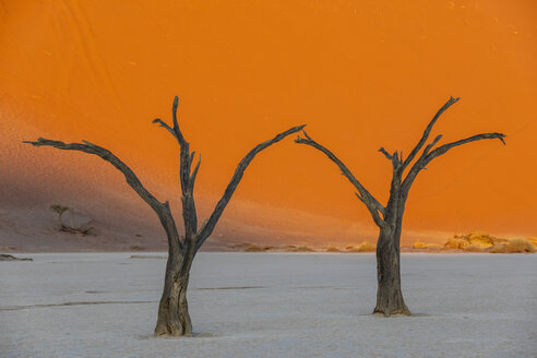 Africa, Namibia, Namib-Naukluft National Park, Deadvlei, dead acacia trees in clay pan - FOF10060