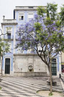 Portugal, Porto, blossoming tree in the old city - CHPF00517
