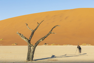 Namibia, Namib Naukluft, Namib Desert, Dead Vlei, tourist photographing dead acacia on clay pan - FOF10067