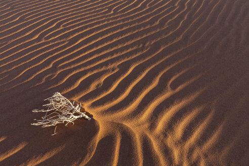 Africa, Namibia, Namib desert, Naukluft National Park, dead bush on sand dune - FOF10112