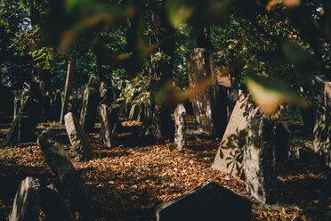 Czechia, Prague, tombstones on the old Jewish Graveyard - GEM02328