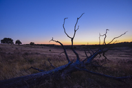 Germany, Lueneburger Heide at sunset - FDF00233