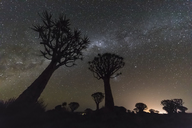 Africa, Namibia, Keetmanshoop, Quiver Tree Forest at night, milky way - FOF10162