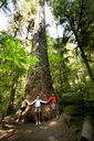 Three people holding hands around the base of a large old growth tree. - AURF01409