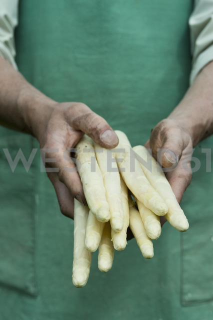 Man holding bundle of organic green asparagus in hands - ASF06207 - Achim Sass/Westend61