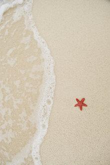 A starfish lying on the beach in the San Blas Islands, Panama. - AURF01841