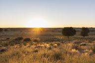 Botswana, Kgalagadi Transfrontier Park, Kalahari, landscape at sunrise - FOF10192