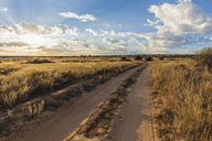 Africa, Botswana, Kgalagadi Transfrontier Park, Mabuasehube Game Reserve, sand track at sunrise - FOF10206