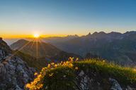 Germany, Bavaria, Allgaeu, Allgaeu Alps, Alpine pasque flower at sunrise - WGF01233