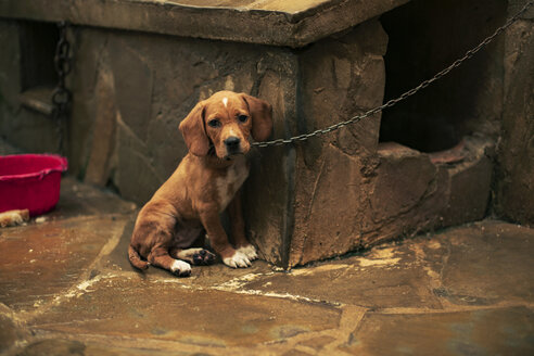 Portrait of a sad puppy tied - ACPF00293
