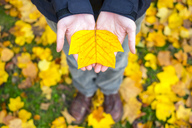 Woman's hands holding a yellow leaf in autumn - AURF02182