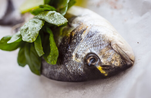 Sea bream with fresh herbs - RAMAF00009