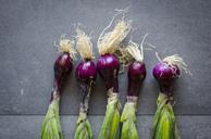Row of five purple onions - RAMAF00015