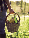 Woman carrying basket of harvested vegetables, partial view - RAMAF00042