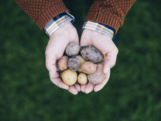 Woman's hands holding various sorts of small potatoes - RAMAF00066