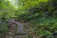 China, Fujian Province, Niumu forest - KKAF01485