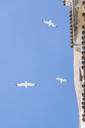Morocco, flying seagulls, from - MMAF00539