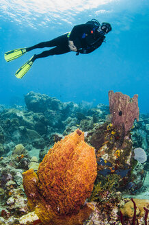 A male diver explores a barrel sponge and  corals, St. Lucia. - AURF02693
