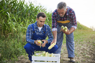 Two experienced farmers controlling their corn crop - ABIF00956