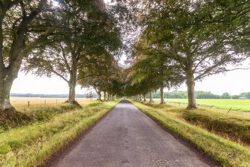 United KIngdom, East Lothian, empty road, tree lined - SMAF01161