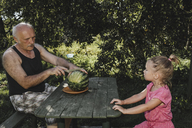 Little girl watching her grandfather cutting watermelon into halves in the garden - KMKF00478