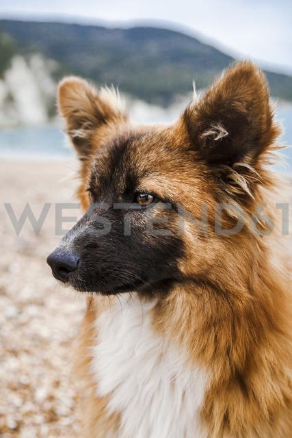 Italy, Vieste, portrait of stray dog on Vignanotica Beach - FLMF00003