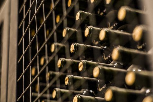 Wine bottles in wine cellar, Mendoza, Argentina - AURF03936
