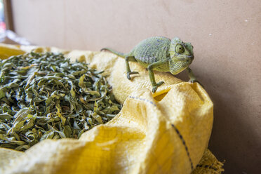 Chameleon in souk in medina of Marrakesh, Morocco - AURF03993