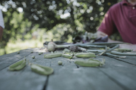 Green peas lying on garden table with man in background - KMKF00526