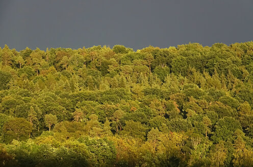Germany, thunderstorm behind forest - JTF01058