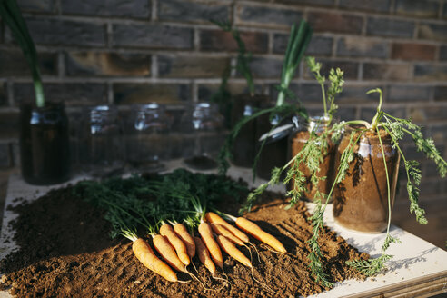 Carrots and other vegetables grown in glass jars - JRFF01830