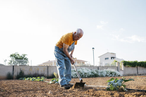 Senior man in denim overall working on farmland and weeding out earth with hoe - JRFF01833