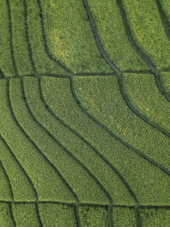 Indonesia, Bali, Aerial view of rice fields - KNTF01258