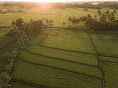 Indonesia, Bali, Aerial view of rice fields - KNTF01261