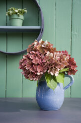 Flower decoration, flour sifter, hortensia in stone jug - GISF00382