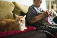 Portrait of cat on the couch with senior woman crocheting in the background - RAEF02130