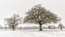 UK, snow-covered winter landscape with bare trees - ALRF01276