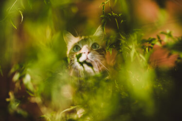 Cat hidden among some plants - RAEF02143
