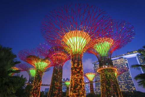 Singapore, Gardens by the bay, Supertree Grove, illuminated at night - FV00026